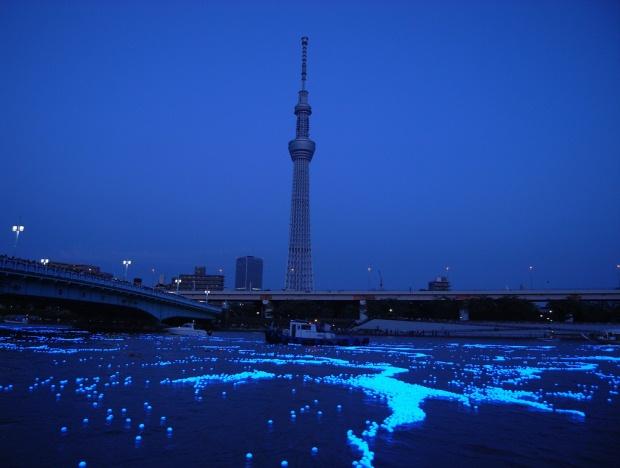 tokyo-hotaru-3