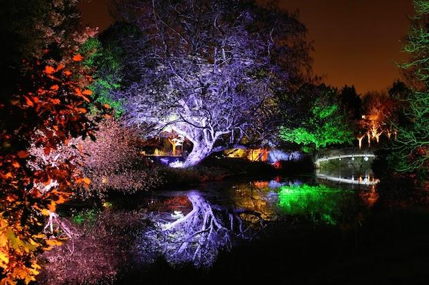 Christmas at Kew - 12