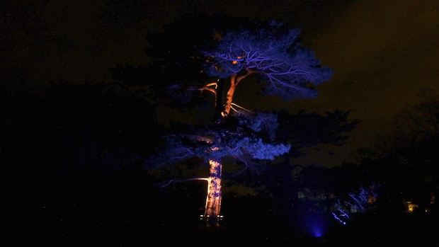 Christmas at Kew - 20
