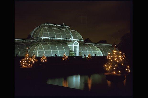 Christmas at Kew - 25