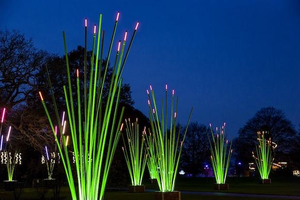 Christmas at Kew - 4
