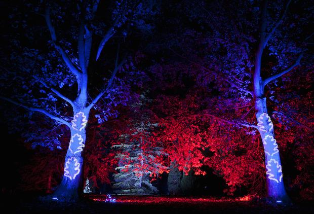 Christmas at Kew - 7