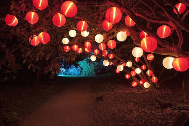 Christmas at Kew - 8